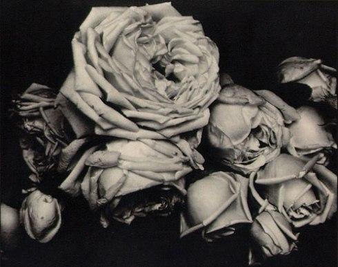edward_steichen_heavy_roses